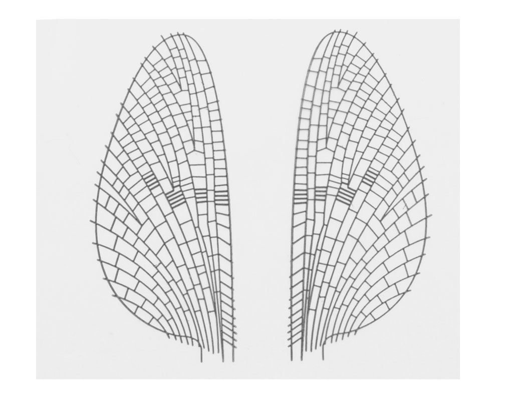 0000395_realistiskt-vingmaterial-m1